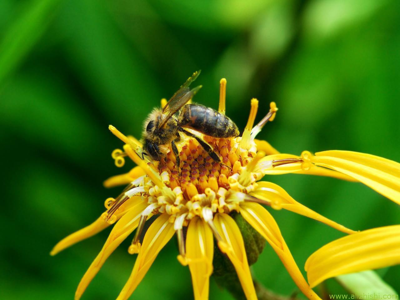 神奇的蜜蜂王国